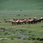 Os 2 últimos dias  a pedalar pela Mongólia e Moral da História