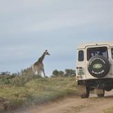 Port Elizabeth- A cavalo pela praia (vídeo) e estar a 2 metros dum rinoceronte