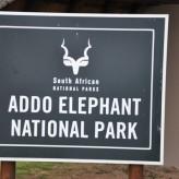 Na maior concentração de elefantes do Mundo- Addo Elephant Park