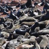 Costa dos Esqueletos: Focas, focas e mais focas. E um padrão dos Descobrimentos