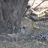 Regresso ao Kruger- As nossas melhores fotos de Safari em África