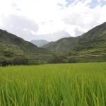 Terraços de Arroz- Filipinas- Nunca viram fotografias de arrozais como estas…