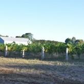 Vinhos Pierre Point- a melhor experiência de hospitalidade na Austrália!