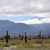 Salta la Linda, Cachi e Cafayate- Roadtrip pela Norte da Argentina