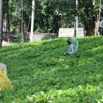 Sri Lanka – Impressões gerais e dicas para planear uma viagem